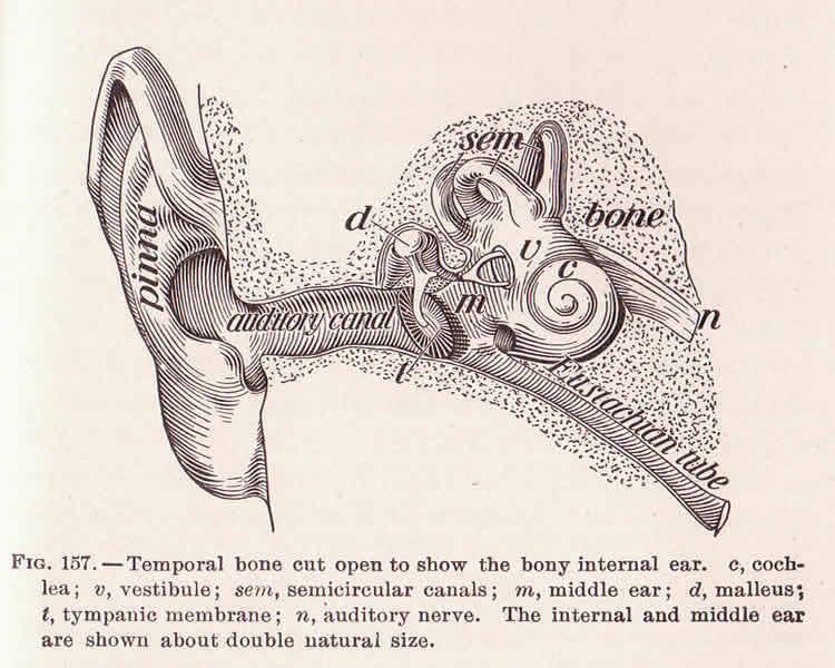 New Test Can Detect Hidden Hearing Loss Neuroscience News