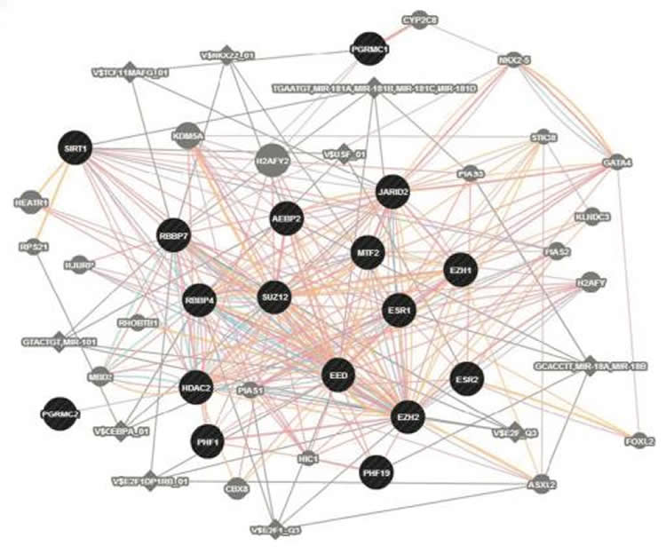 Image shows a diagram of the gene network.