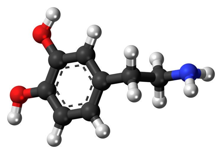 Image shows a stick and ball model of dopamine.