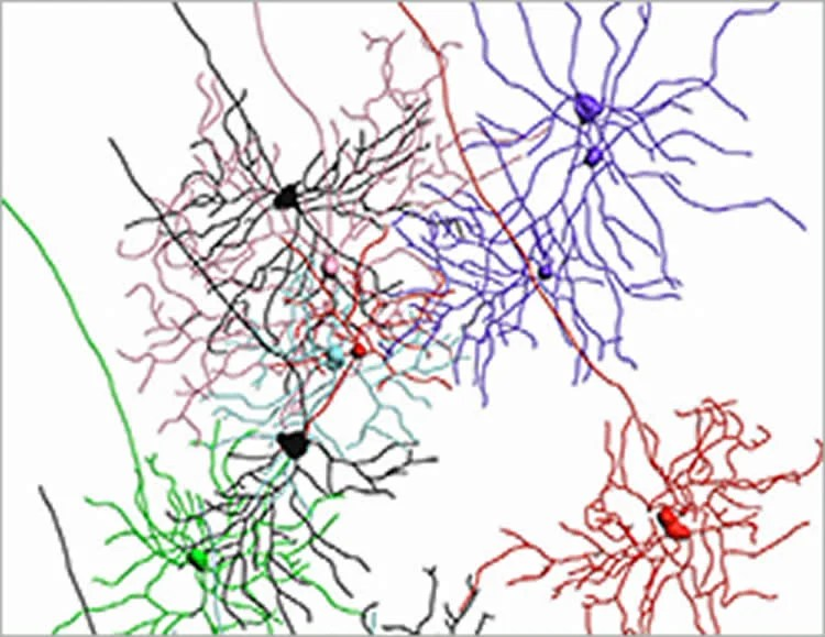 How The Thalamus Helps Us To See Neuroscience News