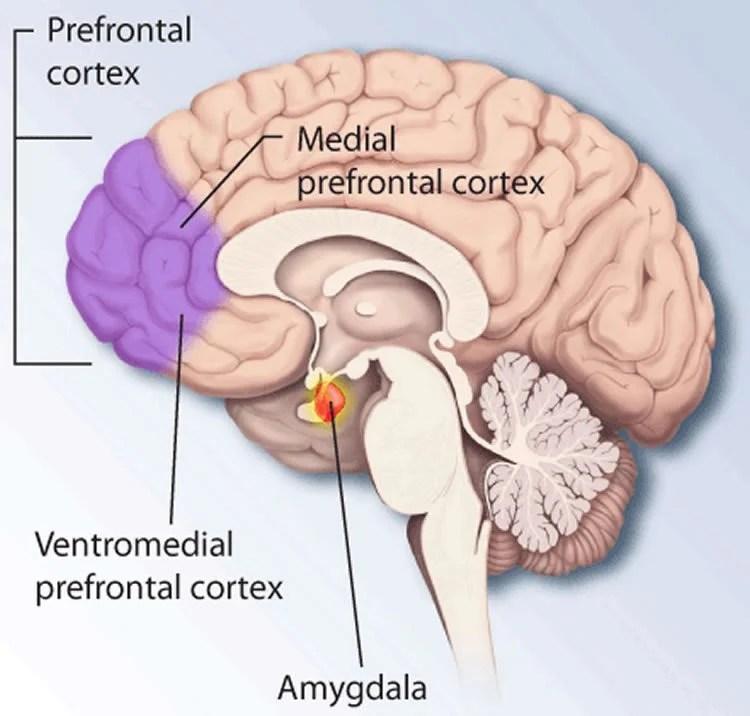 How the Brain Maintains Useful Memories - Neuroscience News