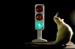 Image shows a traffic light and a rat.