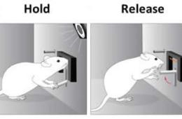 Image shows mouse flipping a switch.