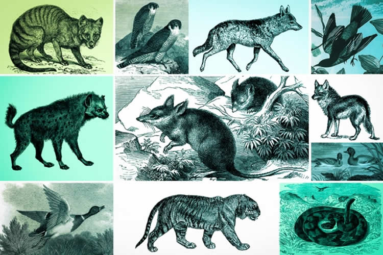 Image shows different animals.