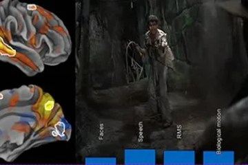Image shows brain scans and a shot from a movie.