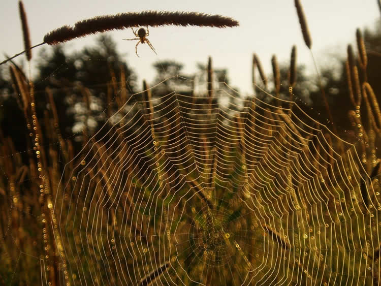 Image shows a spider in its web.