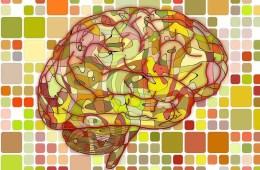 Image shows slides a brain.