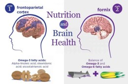Image shows brains and foods high in omegas 3 and 6.