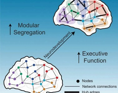 Image shows the brain network organization.