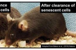 regenerative medicine Research Articles - Neuroscience News