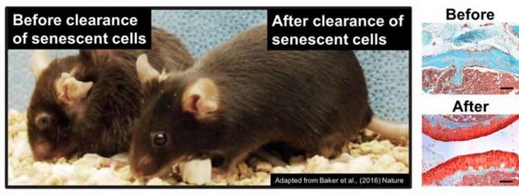 Image shows rats.
