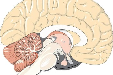 Image shows a cartoon of a brain.
