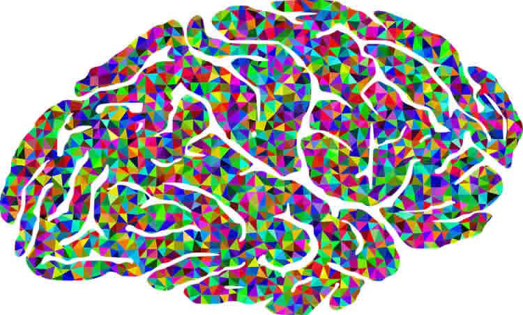 Image shows a multi colored brain.