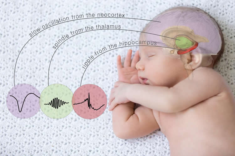 Image shows a baby.