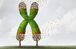 Image shows a letter X.
