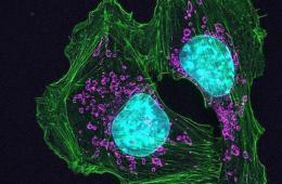skin cancer cells.