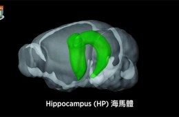 New Functions of the Hippocampus Unveiled