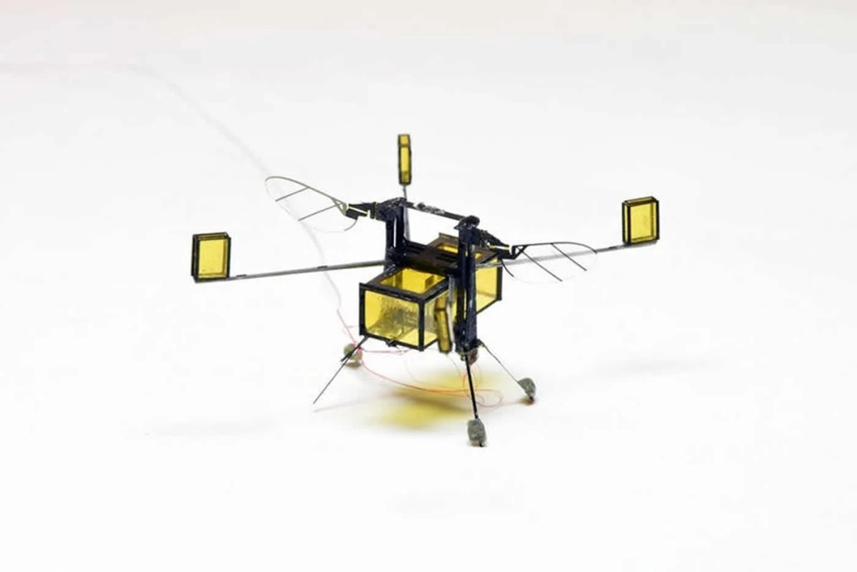 Image shows the RoboBee.