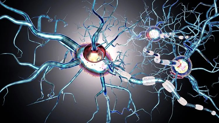 Cellular Self Digestion Process Triggers Autoimmune Disease
