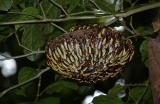 wasps at a hive