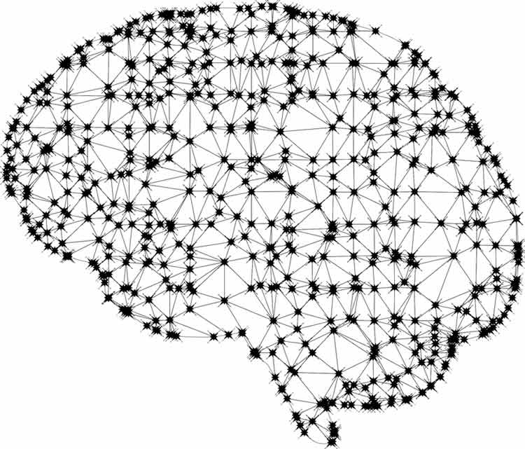 Study Shows Details Of Brain Networks In Autism
