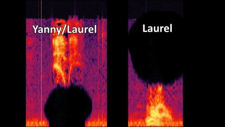 voice clip image yanny laurel