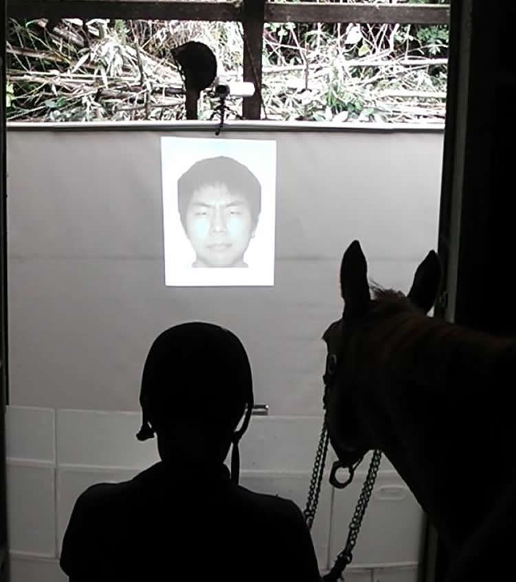 a horse looking at a photo of a man