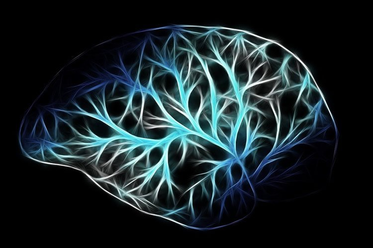 Understanding Brain Mechanisms Of >> Diving In To How Our Brains Process Information Neuroscience News