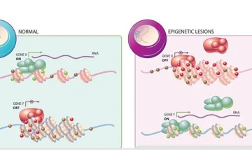 epigenetics illustration