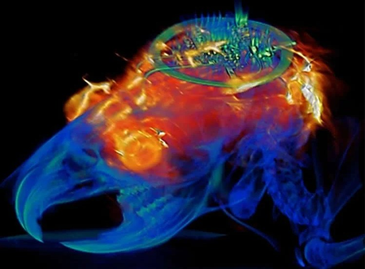 optogenetic implant
