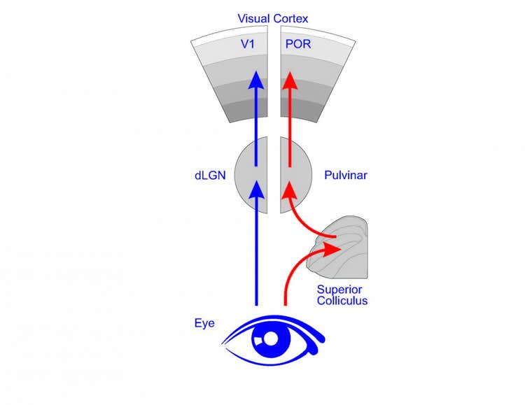 visual system diagram