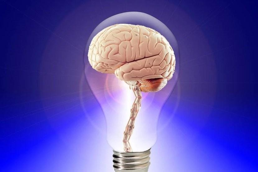 A brain is shown inside of a lightbulb.