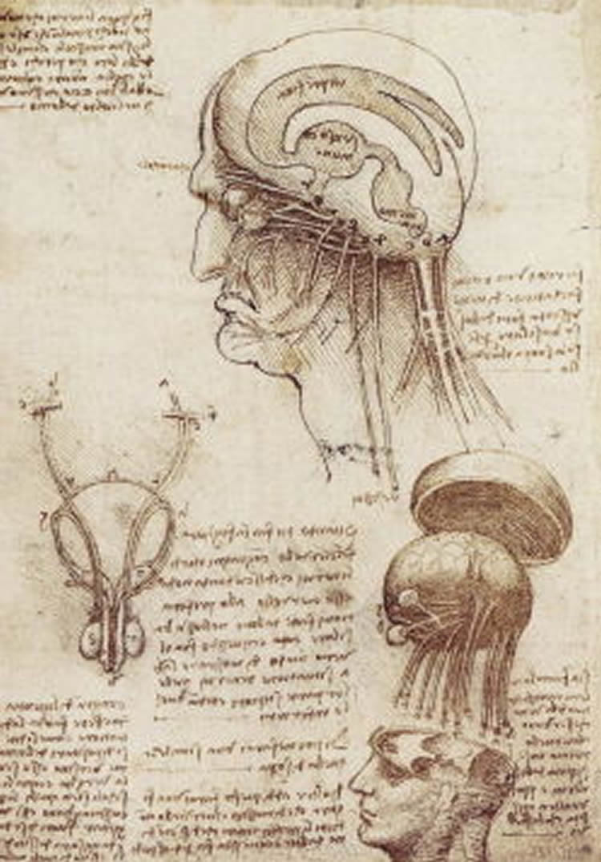 Exploring Leonardo da Vinci's knowledge of the brain