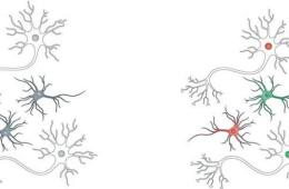 This shows a drawing of neurons