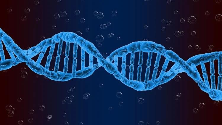 High-risk genes for schizophrenia discovered