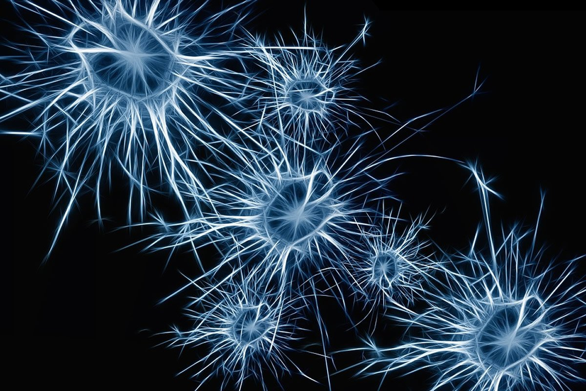 Neurons are shown here