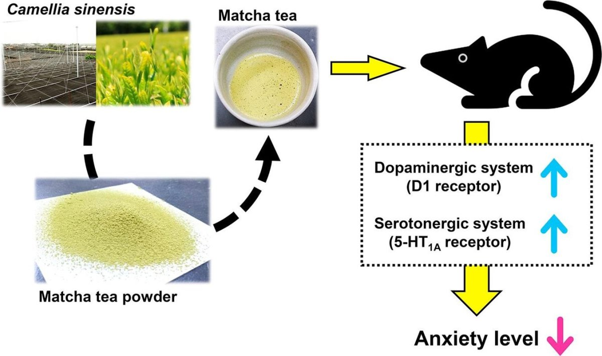 This shows a drawing of a mouse and photo of Matcha extract