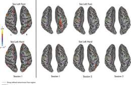 These brain scans shows the foot area highlighted
