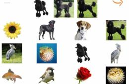 This shows pictures of dogs in categories