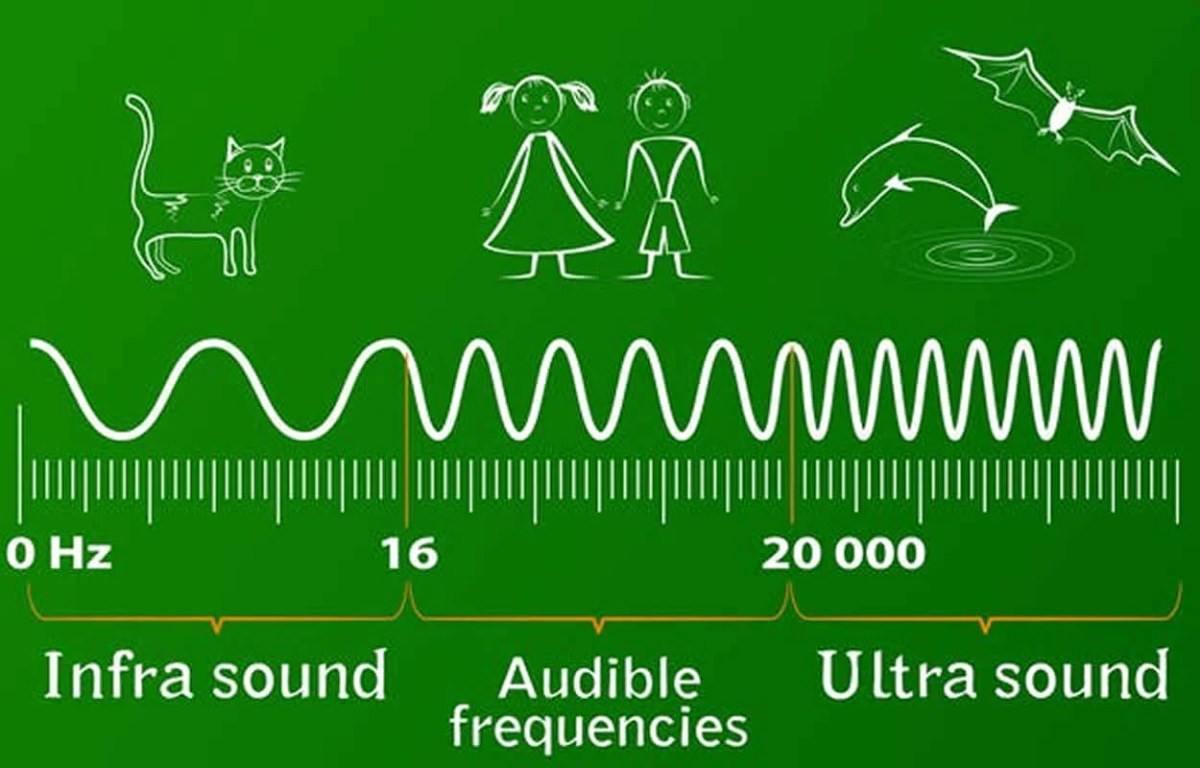 This shows how ultrasound frequency affects different mammals