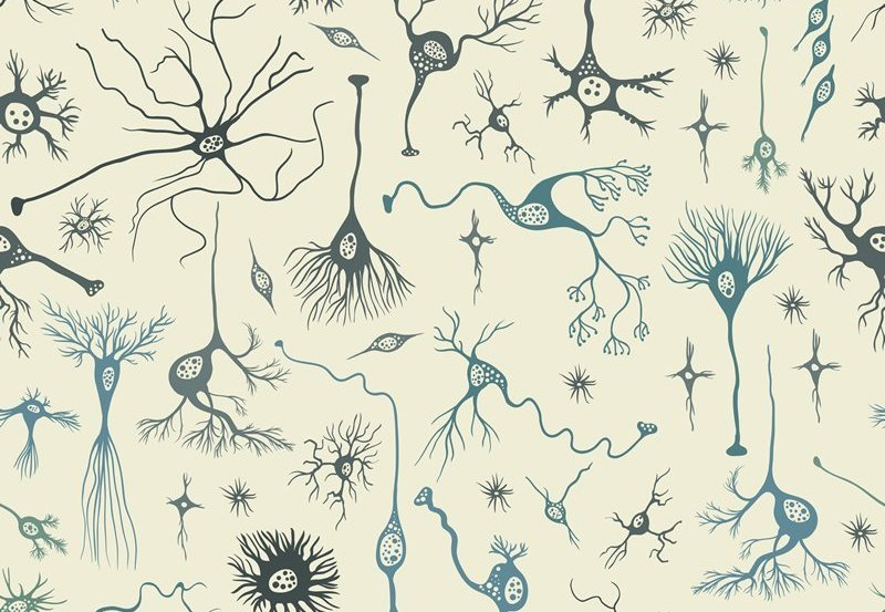 This is a drawing of neurons
