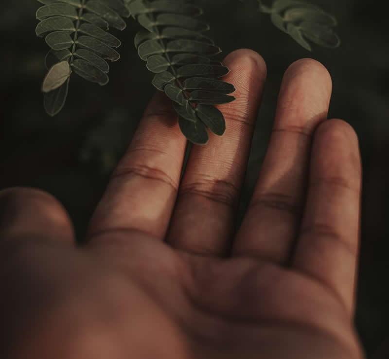 This shows someone touching a leaf