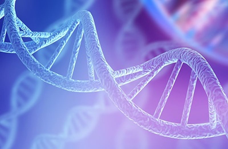 Bmal1 gene is not an essential regulator of circadian rhythms