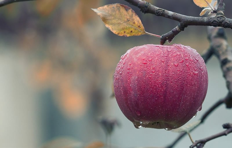 Low fruit and vegetable intakes and higher body fat linked to anxiety disorders