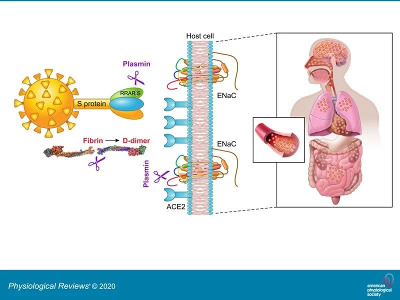 This shows a diagram from the study