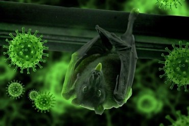 This shows a bat and covid19