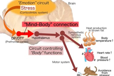 This is a diagram of the circuit