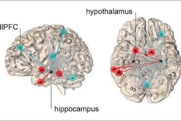 This shows the different hippocampal network activity