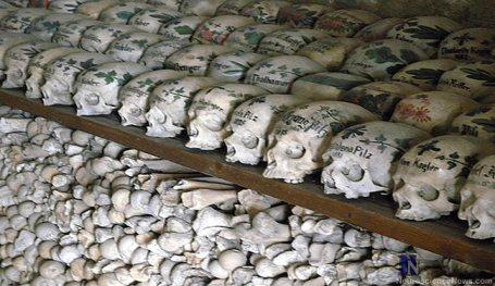A wall of Hallstat Skulls are shown.