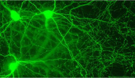 Three neurons are shown highlighted among a backdrop of other neurons.